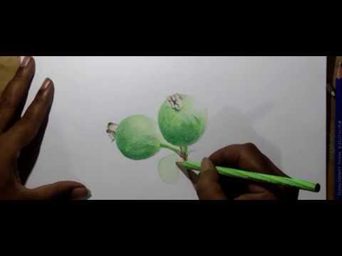 Speed Drawing Cara Menggambar Buah Jambu Biji Mirip Asli Youtube
