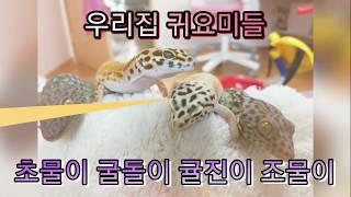 홍삼박스 파충류 귀요미
