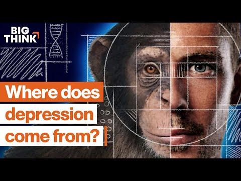 7 dimensions of depression, explained   Daniel Goleman, Pete Holmes & more   Big Think
