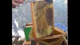 """видео Интернет-магазин для пчеловода """"Вощина"""""""