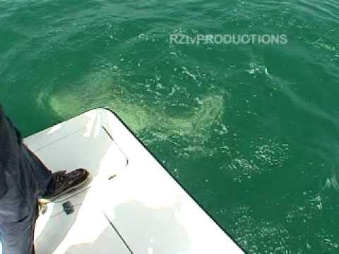 MIAMI,TIBURON ATACA,SHARK ATTACK