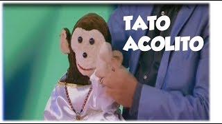 TATO ACÓLITO