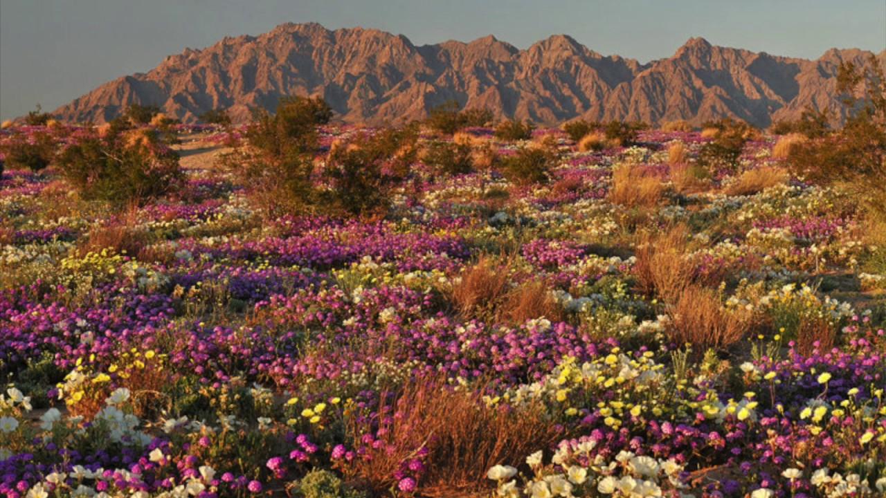 Flowers In The Desert Play