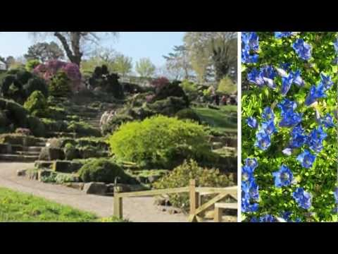 My Stupeflix Video photos that I took at the RHS Garden Wisley in April.