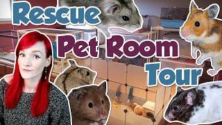 Munchie Talk | The Rescue's Pet Room Tour 2019 | Munchie's Place thumbnail