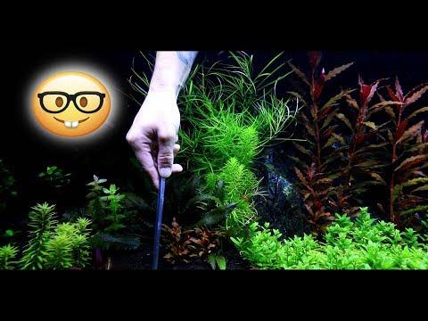 Trimming Aquarium Plants