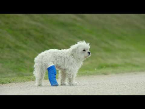 """Amazon Premium - Anuncio perrito blanco 30"""""""