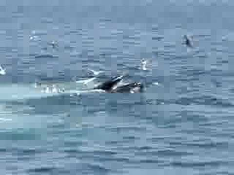 whale watching Boston
