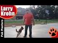 Belgian Malinois Playing / Training Session / Nashville Dog Training