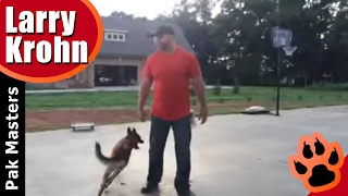 Belgian Malinois Play / Training Session / Nashville Dog Training