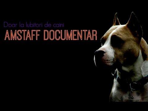 Amstaff Documentar - Iubitori de caini (Ro)