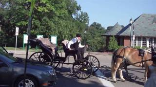 phipps conservatory pittsburgh.....a horse drawn carriage....and a bride!!