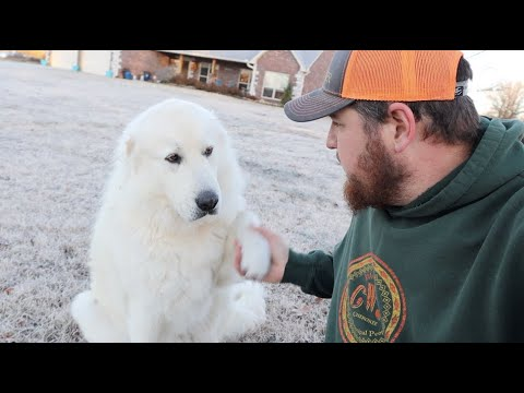 Trespassers and Livestock Guardian Dogs!
