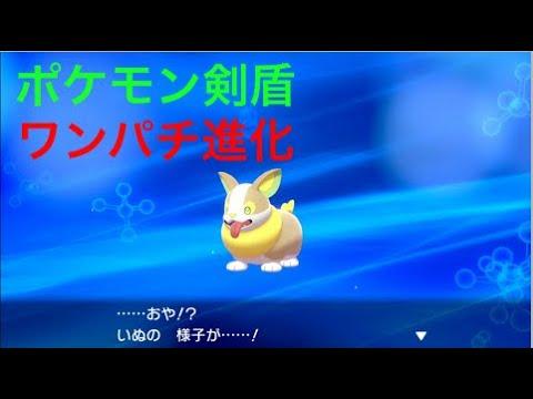 【ポケモン剣盾】いぬ(ワンパチ)が進化しました Pokémon Sword Shield