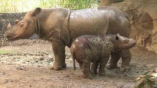 Endangered Species Day (Short version) - Cincinnati Zoo