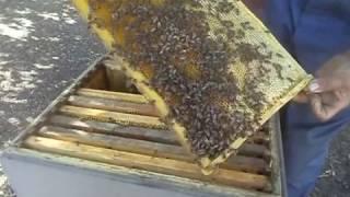 Собираем пчелиное гнездо в зиму (легко и просто)