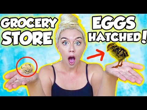 I HATCHED AN EGG FROM THE GROCERY STORE! SO SHOCKING AND AMAZING | NICOLE SKYES en streaming