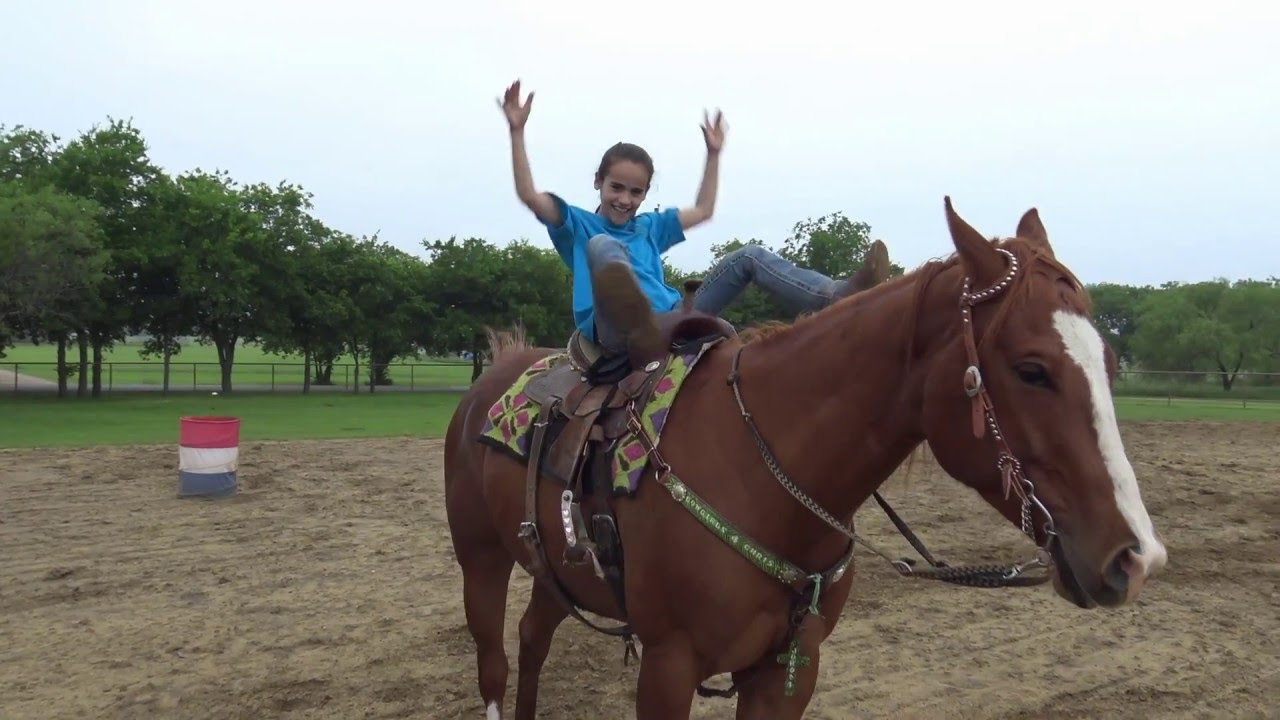 Bombproof Barrel Horse Fuzzy A Horse For Sale At