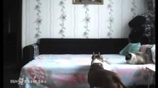 Co pes dělá, když pán není doma