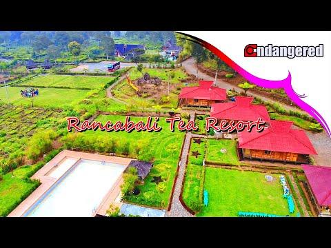 villa-rancabali-tea-resort