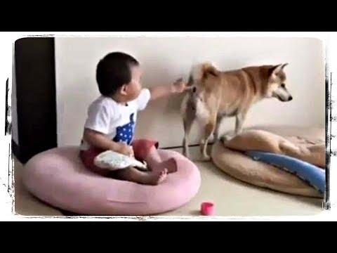 ЖИВОТНЫЕ И ДЕТИ (приколы с животными)   ANIMALS AND KIDS (funny Animals) #534