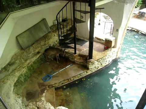 Deer swimming in my pool youtube - Swimming swimming in my swimming pool lyrics ...