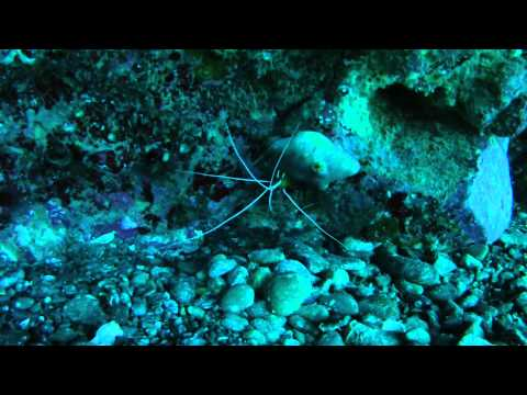 Our favourite shots! | Cleaner shrimp in action