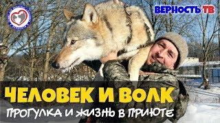 """Человек и волк: """"Наши волки в лес не смотрят"""""""