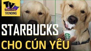 """Starbucks miễn phí thức uống với tên gọi """"puppuccino"""" dành riêng cho các cún đi cà phê cùng chủ"""