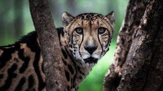 Исследование: массовое вымирание животных угрожает существованию людей (новости)
