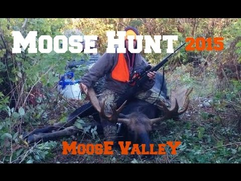 Awsome Moose Hunting In New Brunswick Canada Zone 3 Moose Valley 2015