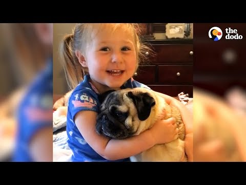 download Little Girl Says The Funniest Things To Her Pugs | The Dodo