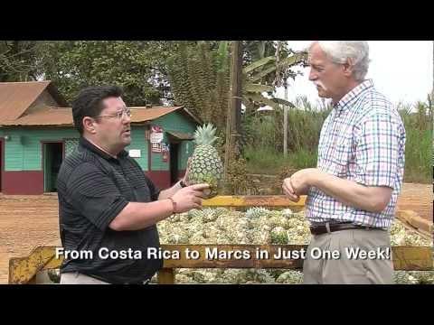 Marc's Costa Rica Trip to Del Monte Pineapple Farm
