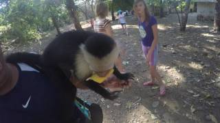 White face monkey pulls down mossimo catronis shorts