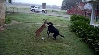 ボールで遊びたい犬、その犬に翻弄されるシカ、その2匹を見守る猫