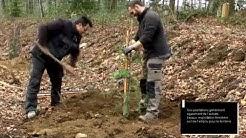 Travaux de plantation à Saint-Pardoux