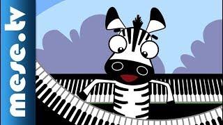 Kiskalász Zenekar: Zooli a zebra (gyerekdal) | MESE TV