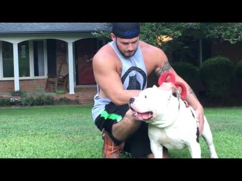 CBF history lesson and talking about the bully breed