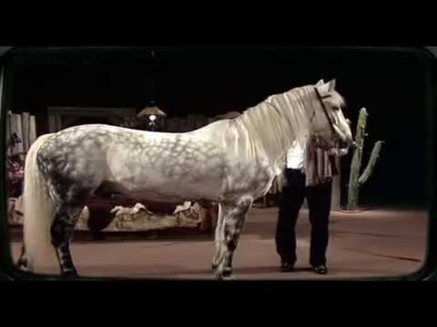 Toni Hochegger und sein Pferd Jacket 1981