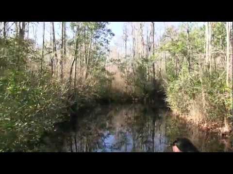 Okefenokee Swamp Park Boat Tour