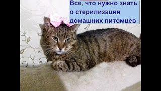 Стерилизация кошек и котов - плюсы и минусы