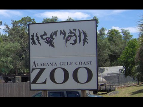 Visiting Alabama Gulf Coast Zoo in Gulf Shores, Alabama, United States