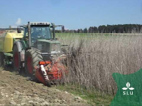 1-step spring harvest of industrial hemp