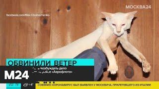 """Полиция отказалась возбуждать дело из-за гибели котов на рейсе """"Аэрофлота"""" - Москва 24"""
