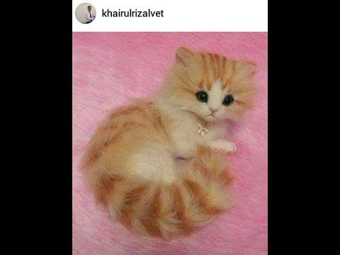 Kucing Imut Youtube