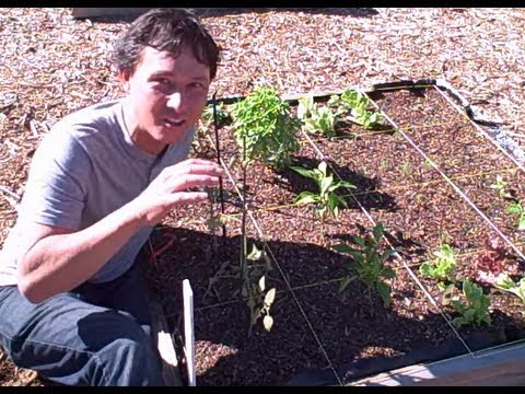 Best Practices for Growing Vegetables in a Community Garden or at Home in Raised Beds