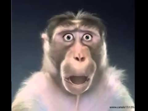 La Scimmia Biricchina Youtube
