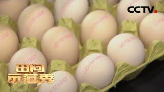 《田间示范秀》网红专家带来养鸡新模式 让散养鸡下出健康蛋 20200605 | CCTV农业