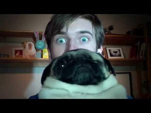 PewDiePie's Dog Maya (Cutest Video Ever) - YouTube