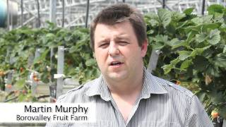 Wexford Strawberries Ireland About Us